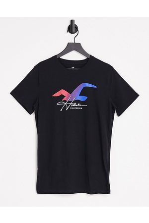 Hollister Ombre seagull logo t-shirt in